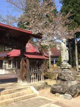 神社桜2.jpg